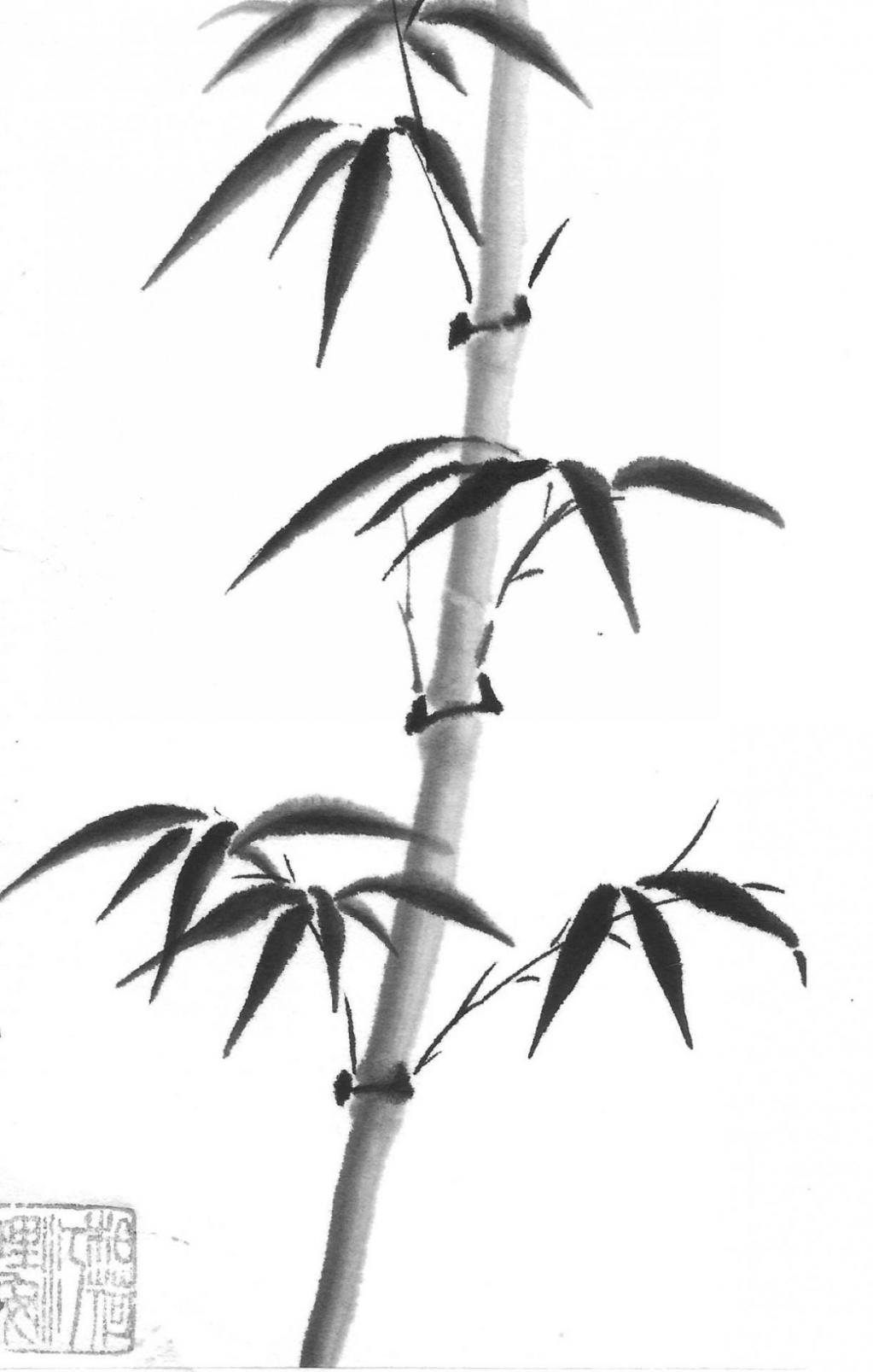 14ter bambou