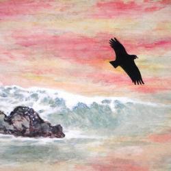 Aigle en vol soleil couchant