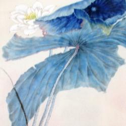 Lotus bleu fragment pigment bleu de Taiwan