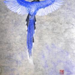 Magpie de taiwan 2