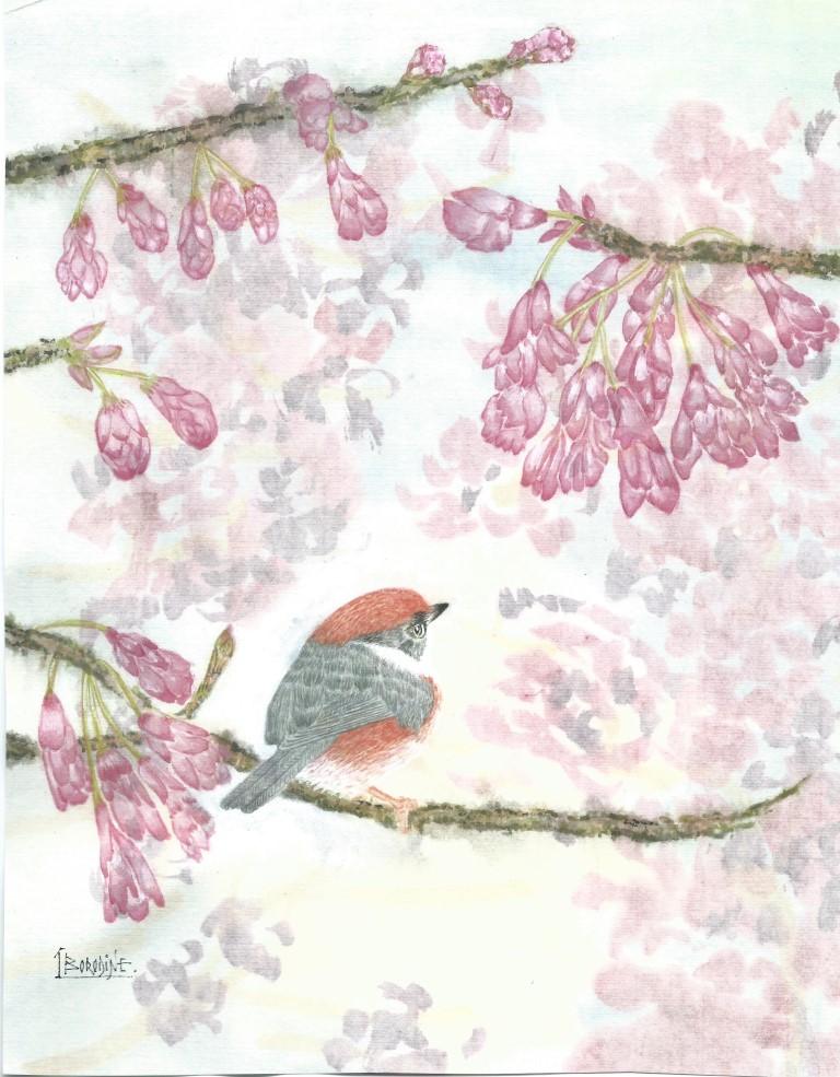 Oiseau de taiwan