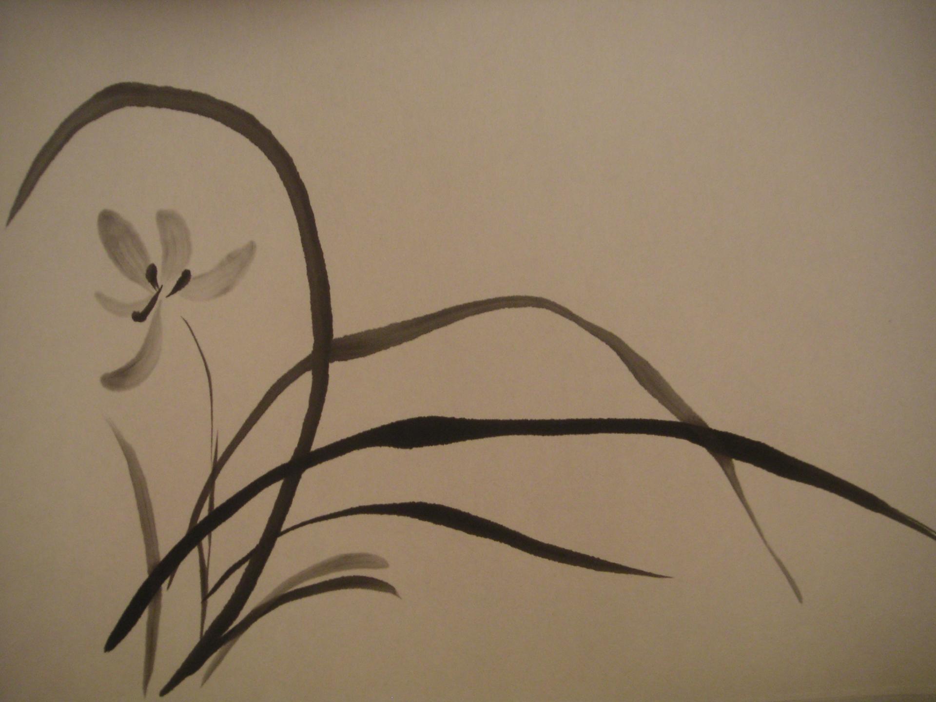 Orchidee monochrome Amelie Besnard